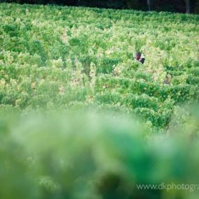 DK Photography dkp_7885-285x285 Preview ~ Lee Che & Reece's Engagement Shoot in Groot Constantia Wine Estate  Cape Town Wedding photographer
