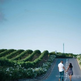 DK Photography dkp_8012-285x285 Preview ~ Lee Che & Reece's Engagement Shoot in Groot Constantia Wine Estate  Cape Town Wedding photographer
