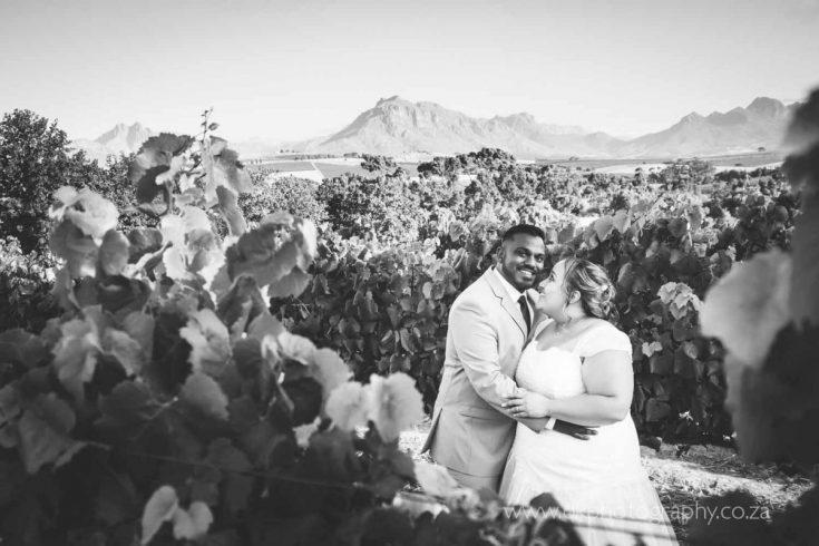 DK Photography DKP_8915-735x490 Preview ~ Preo & Kirsty's Wedding in Devon Valley & JC Le Roux, Stellenbosch